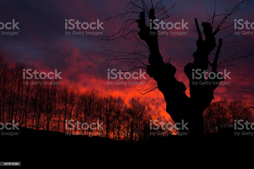 Wildfire. Silhouettes of dry trees and fire background. stock photo