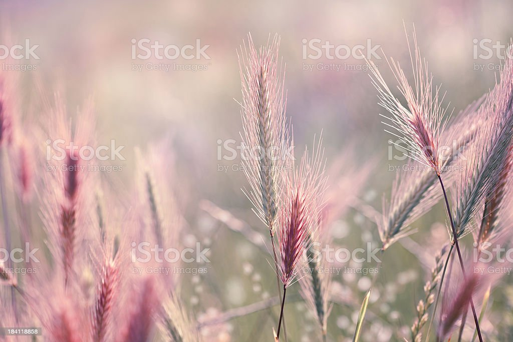 Wildflower background stock photo