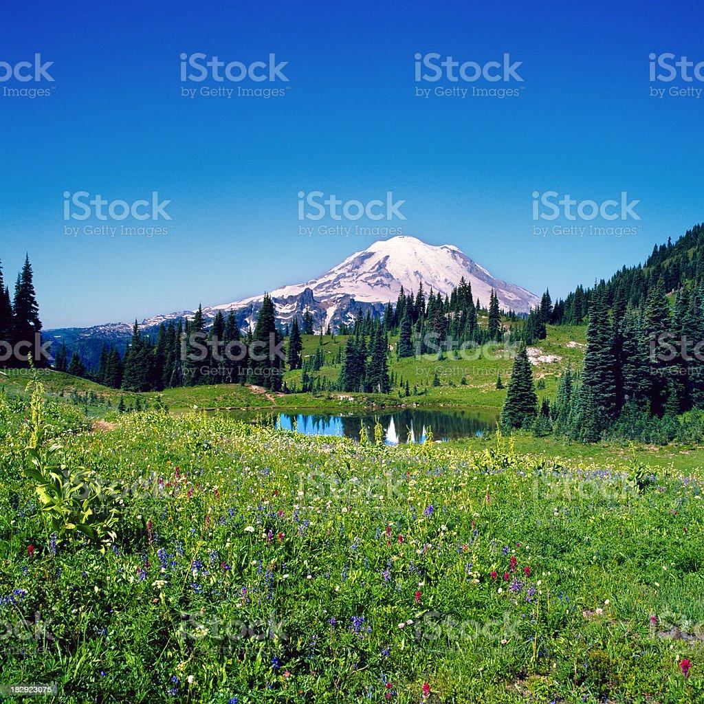 Wildflower Field and Mount Rainier, Washington royalty-free stock photo