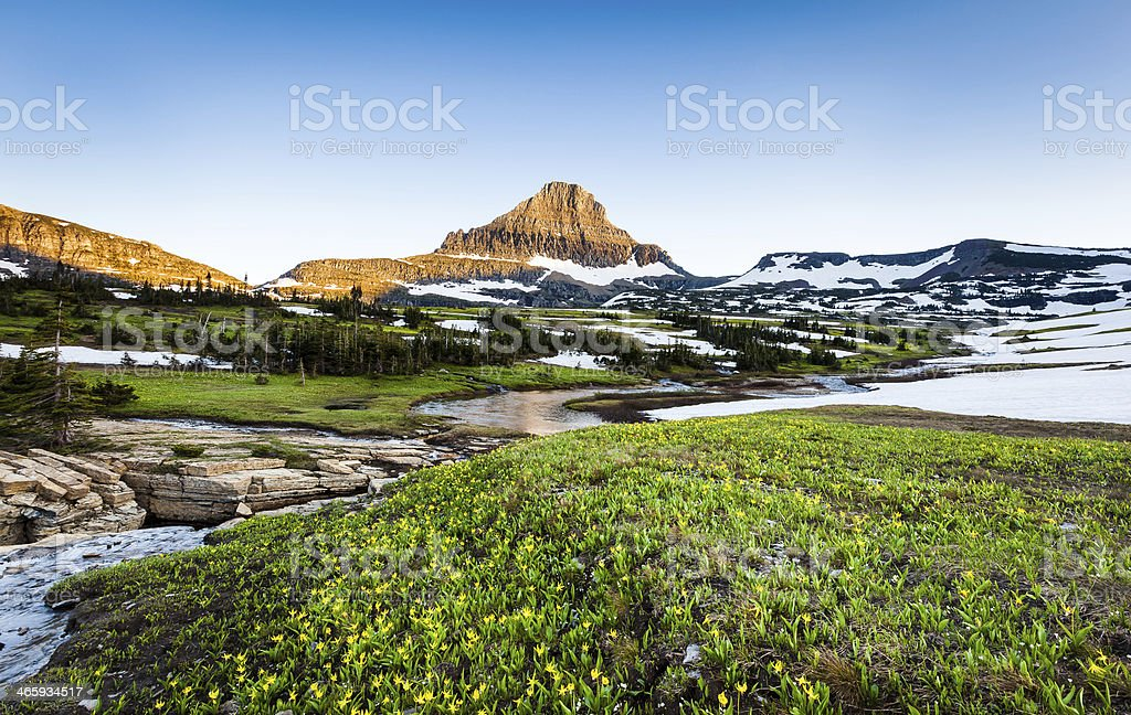Wildflower field at Logan Pass, Glacier National Park, MT stock photo