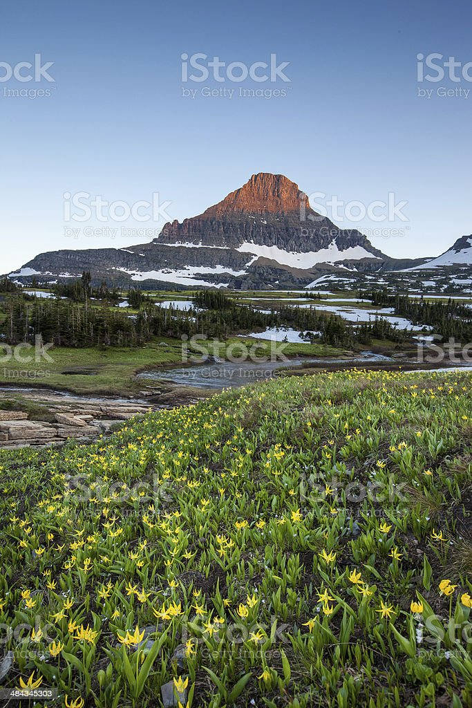 wildflower field at Logan Pass, Glacier National Park stock photo