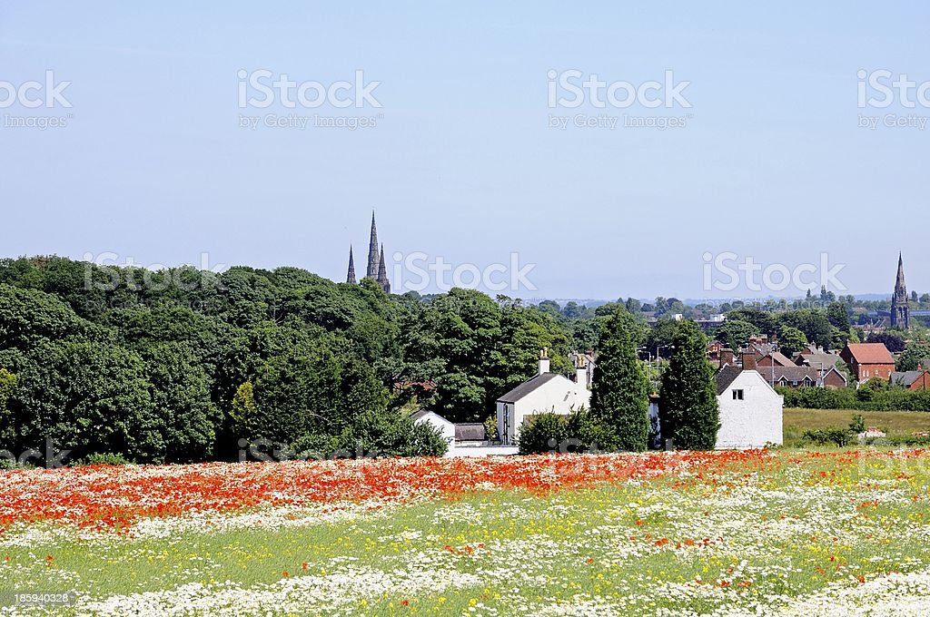 Wildflower field, Lichfield, England. stock photo