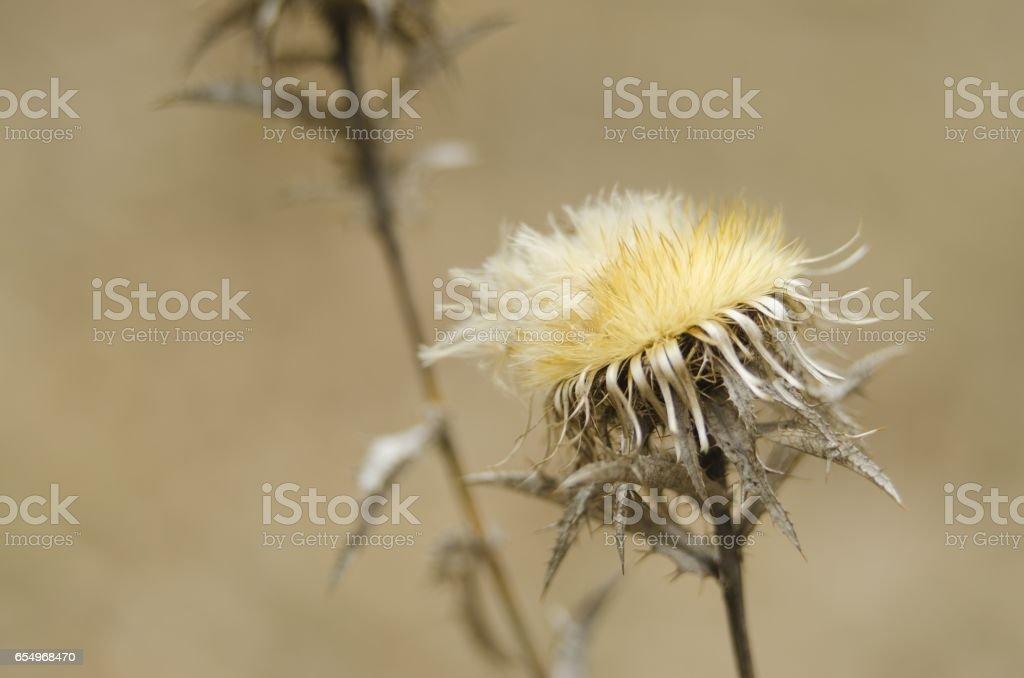 wildflower in nature stock photo