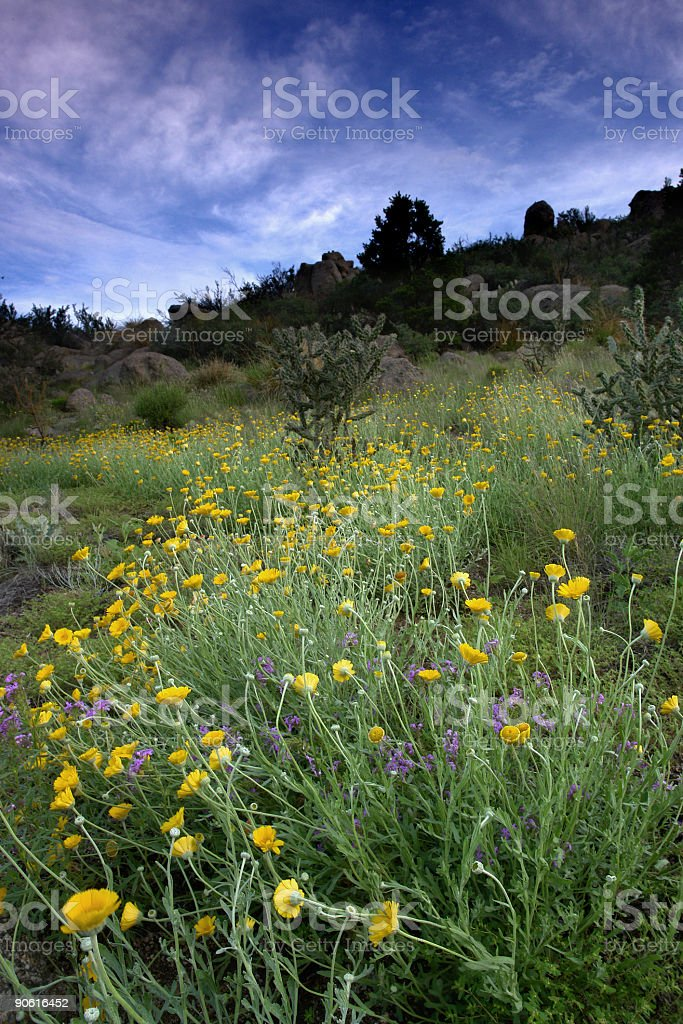 wildflower landscape royalty-free stock photo