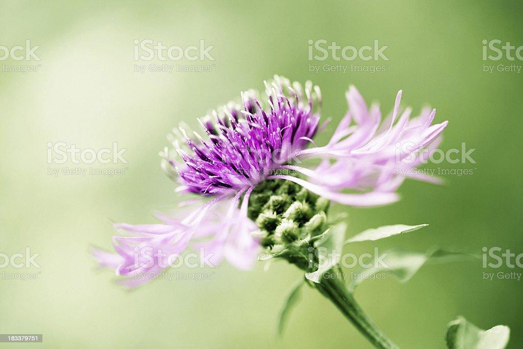 Wildflower macro stock photo