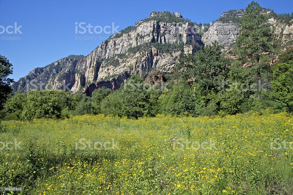 Wildflower Meadow and Mountain stock photo