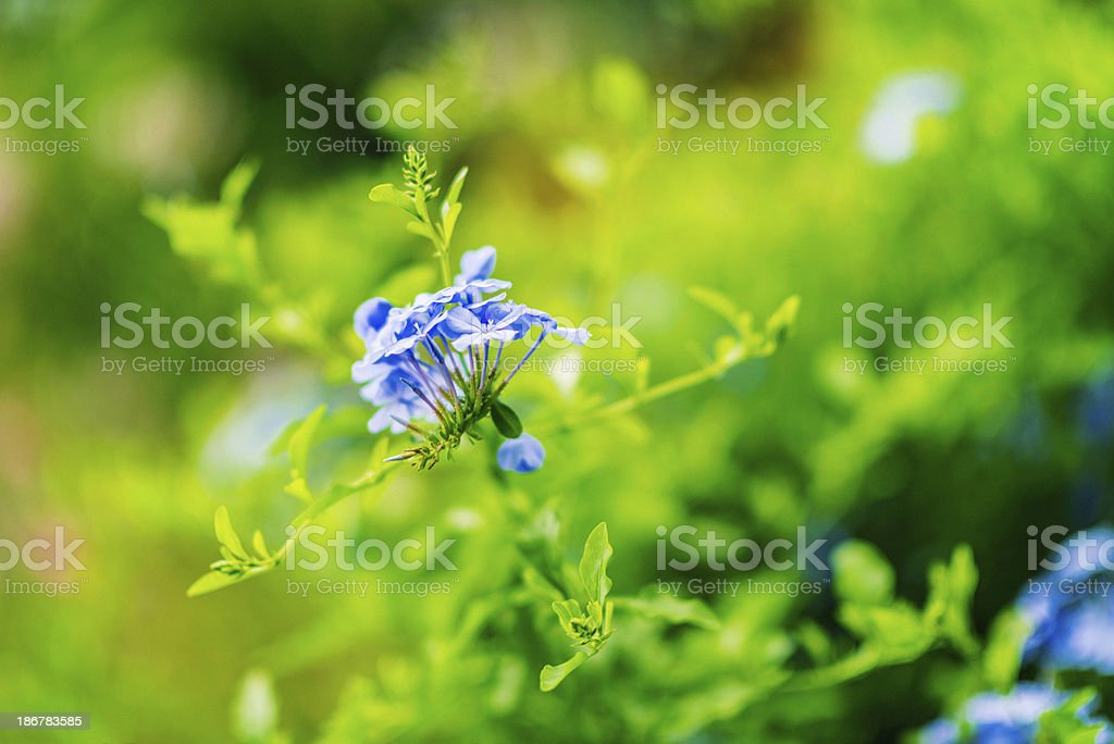 Wildflower Meadow royalty-free stock photo