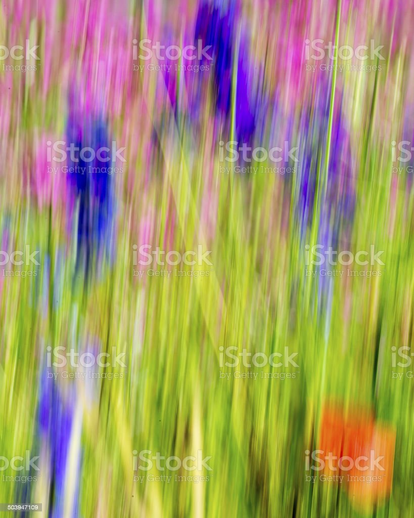 Wildflower Motion Blur royalty-free stock photo