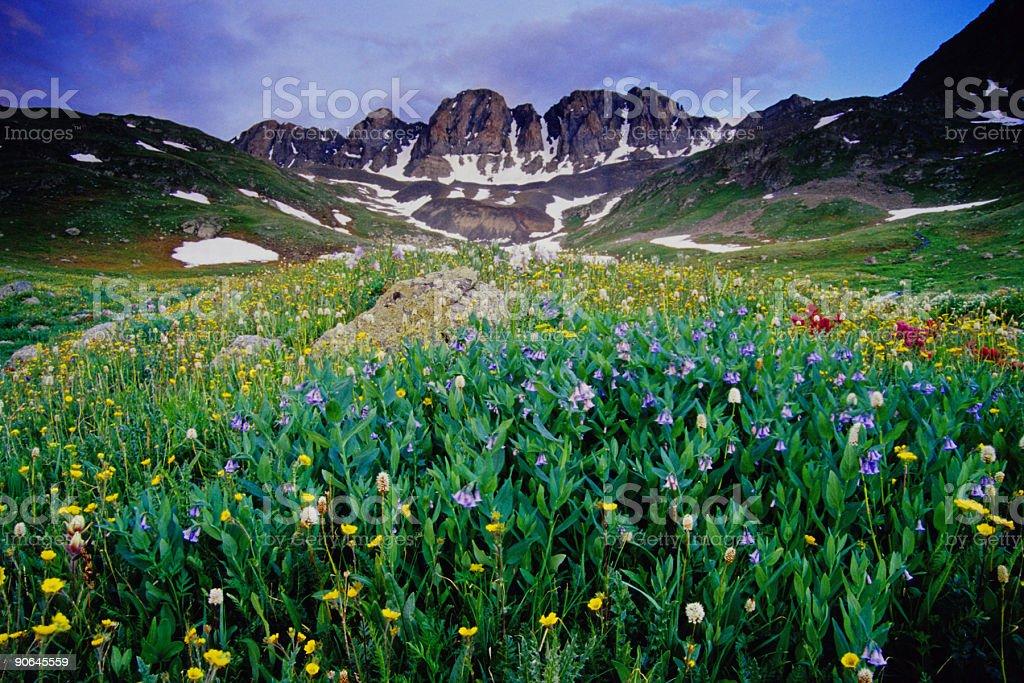 wildflower mountain landscape stock photo