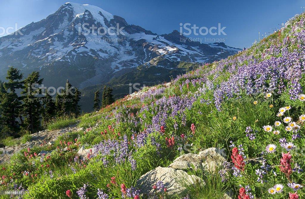 Wildflower Mountain stock photo