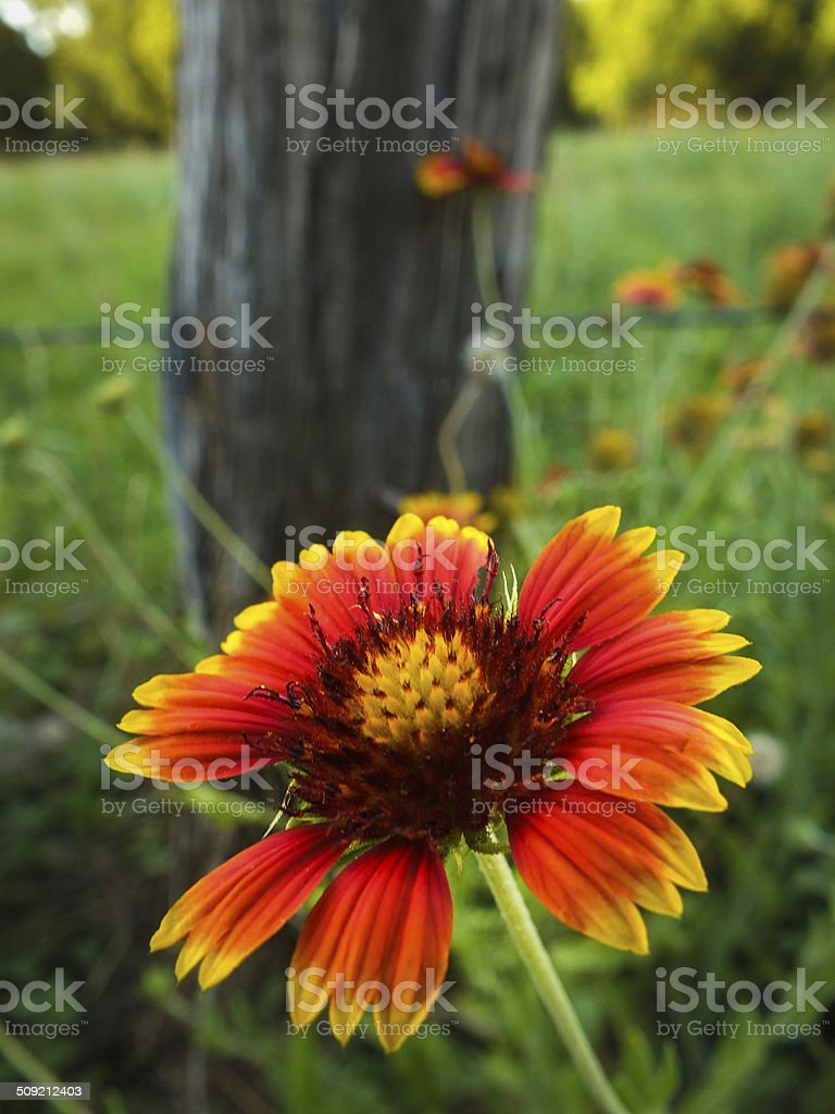 Wildflower next to post royalty-free stock photo
