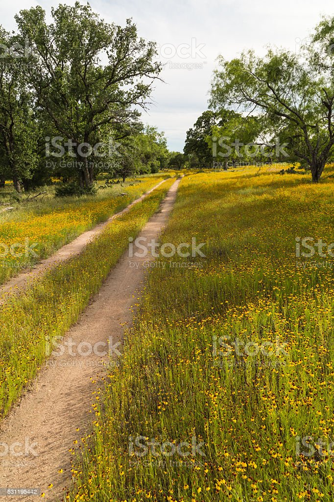 Wildflower on Dirt Road stock photo