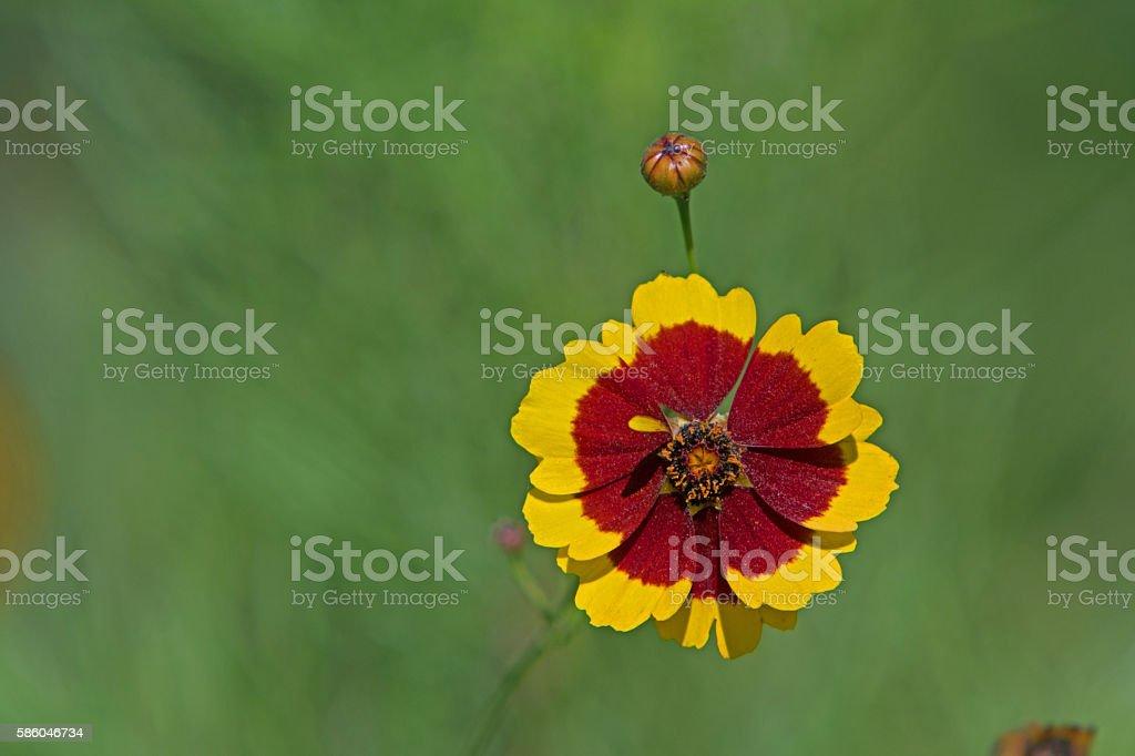 Wildflower stock photo