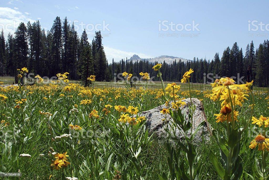 Wildflower prairie royalty-free stock photo