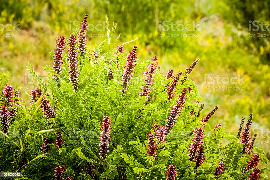 Wildflower Shrub with Pink Flowers stock photo