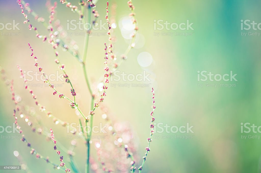 Wildflower with waterdrops stock photo