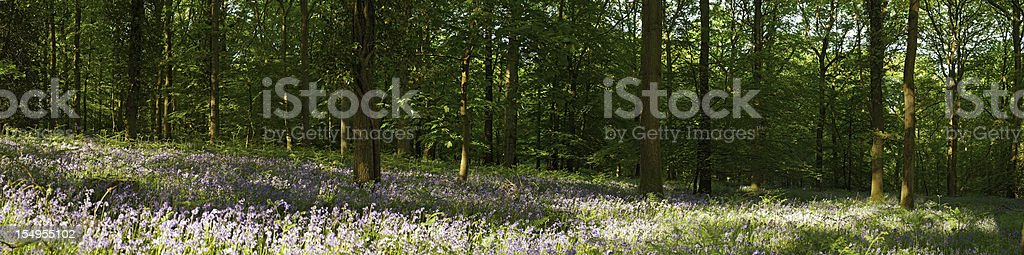 Wildflower woodland idyllic summer forest panorama royalty-free stock photo