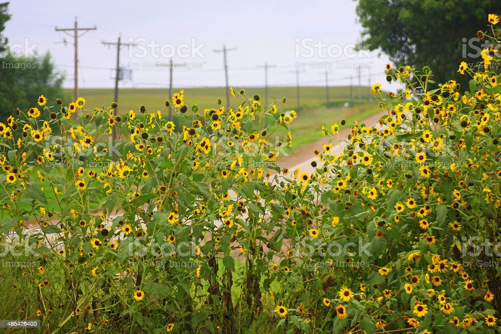 Wildflowers Add Color to an Iowa Country Road stock photo