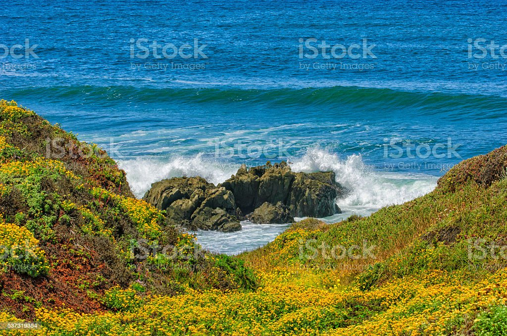 Wildflowers Along the Rocky California Coast stock photo