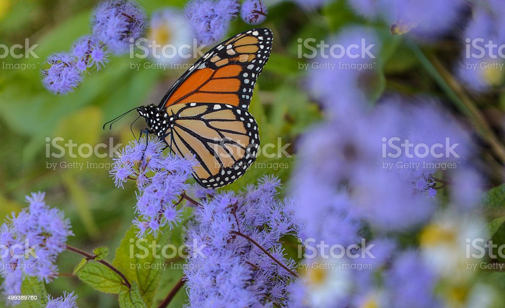 Wildflowers And Butterfly stock photo