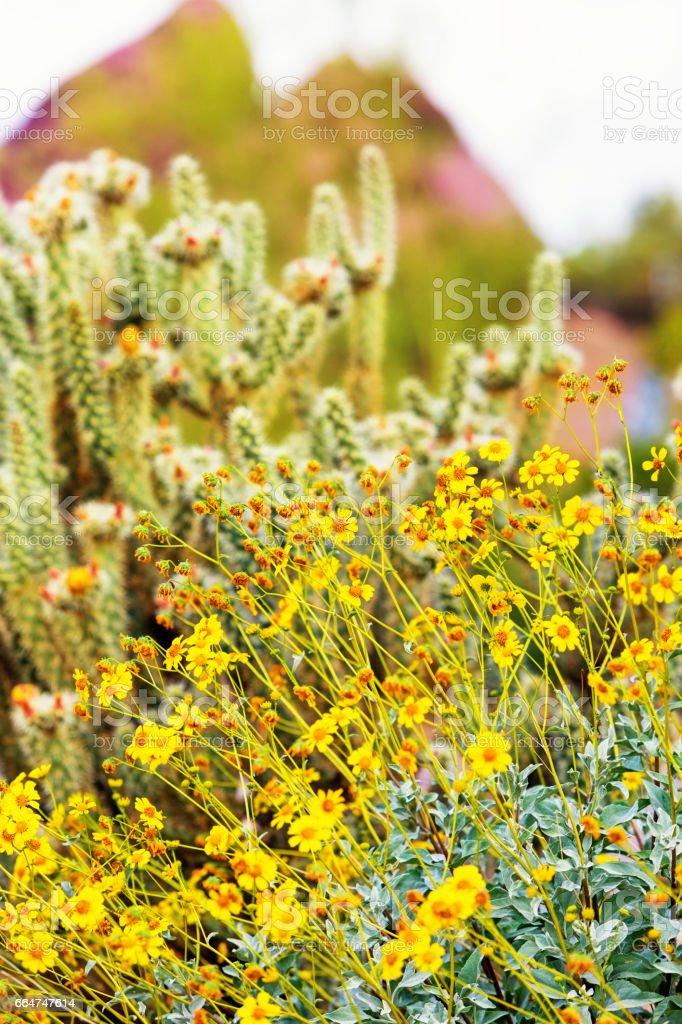 Wildflowers and Cholla Cactus in Arizona stock photo