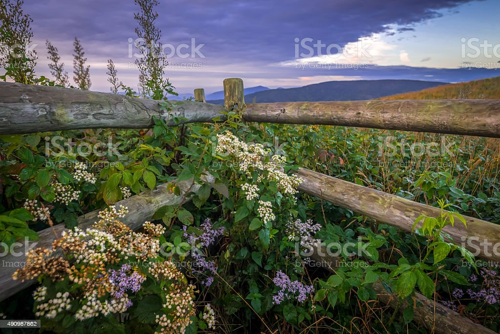 Wildflowers and fence along the Appalachian Trail stock photo
