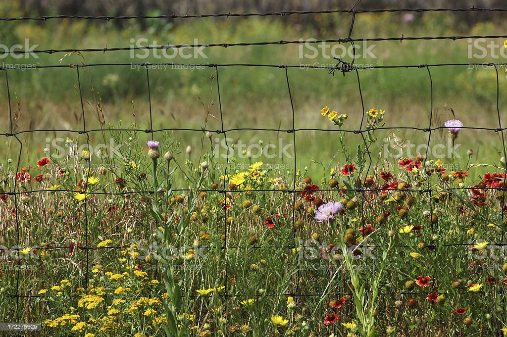 Wildflowers and fence royalty-free stock photo