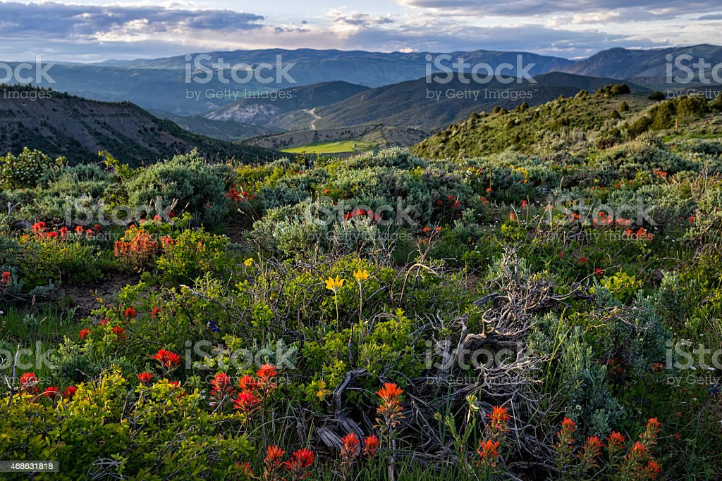 Wildflowers and Incredible Mountain View stock photo