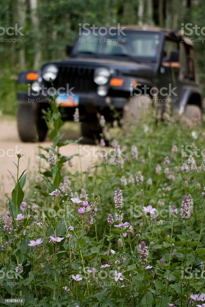 Wildflowers and Jeep on Trail royalty-free stock photo
