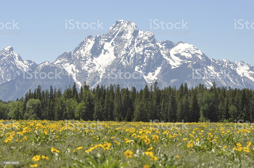 wildflowers and mountain peaks royalty-free stock photo