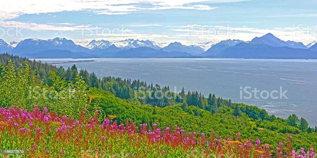 Wildflowers and Mountains by and Ocean Bay stock photo