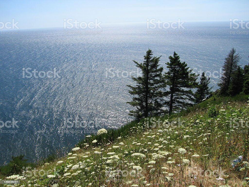 Wildflowers and ocean royalty-free stock photo
