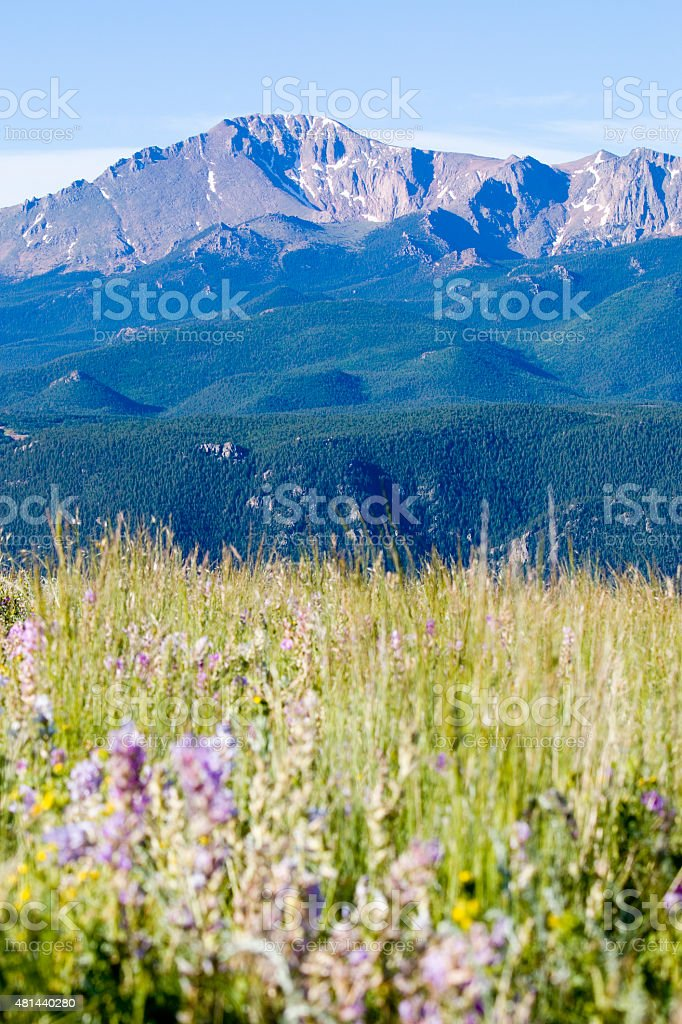 Wildflowers and Pikes Peak in the Pike National Forest stock photo