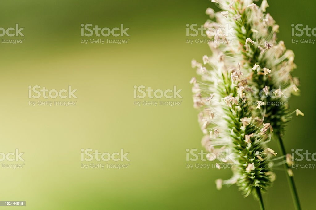 Wildflowers and pollen royalty-free stock photo