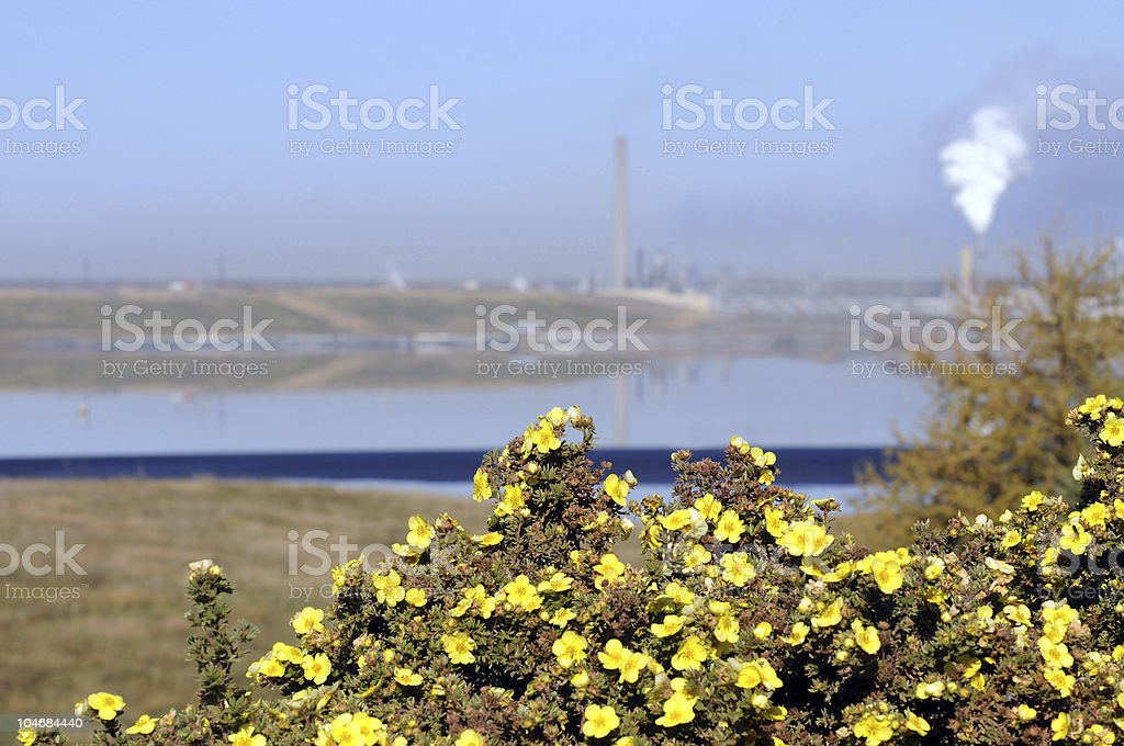 Wildflowers and pollution royalty-free stock photo