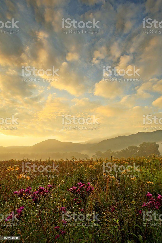 wildflowers and sky royalty-free stock photo