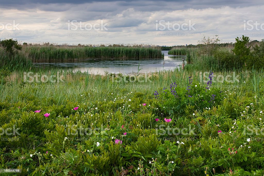 Wildflowers and the West Pond stock photo