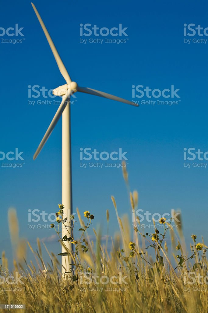 wildflowers and wind turbine on the West Texas plains royalty-free stock photo