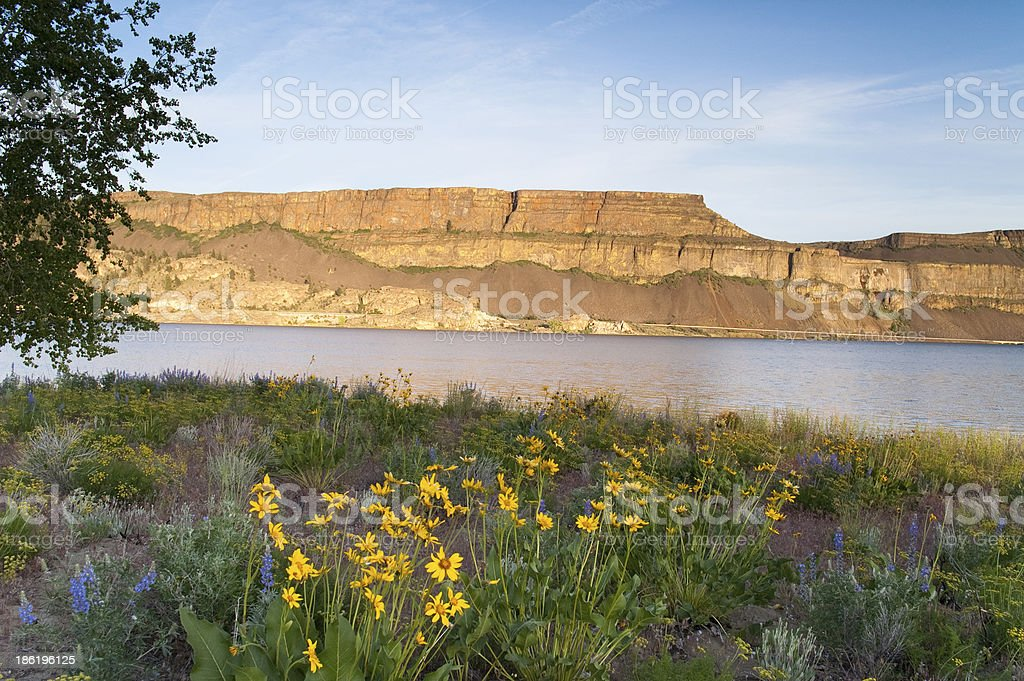 Wildflowers Around Banks Lake Steamboat Rock State Park stock photo