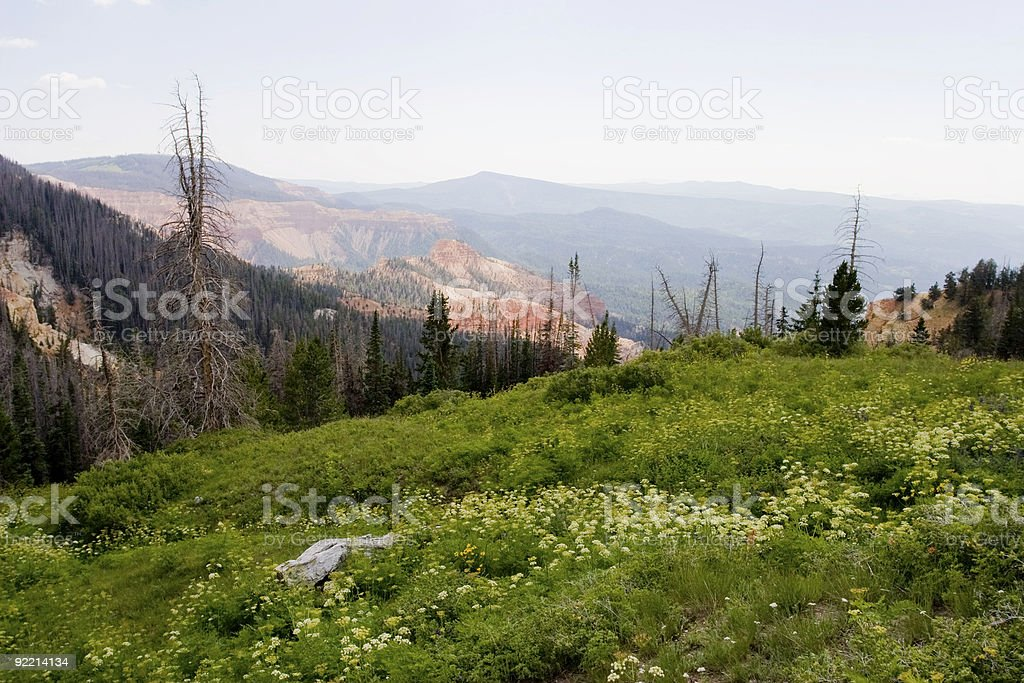 Wildflowers at Cedar Breaks National Park stock photo