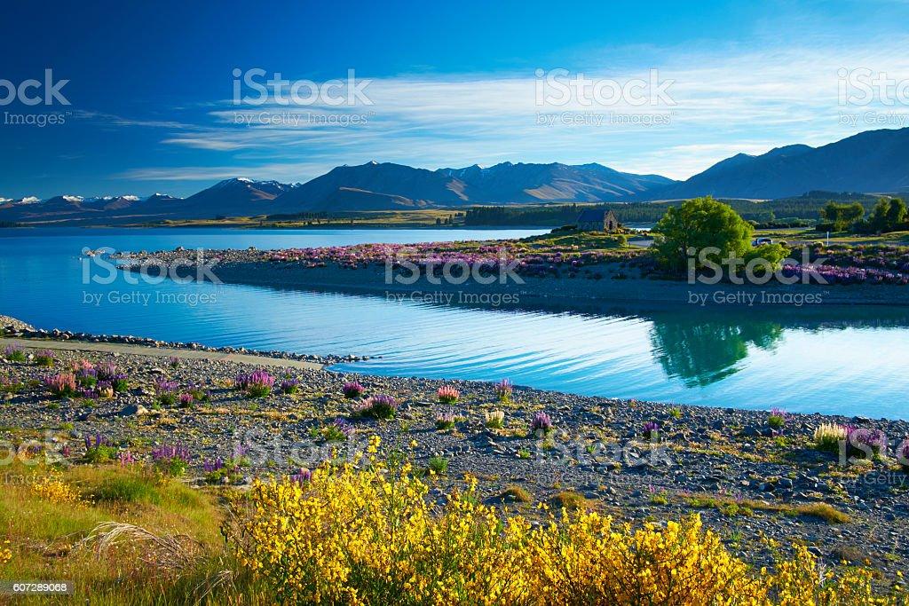 Wildflowers At Lake Tekapo stock photo