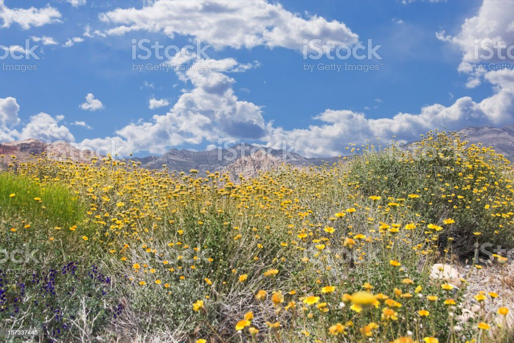 Wildflowers at Red Rock royalty-free stock photo
