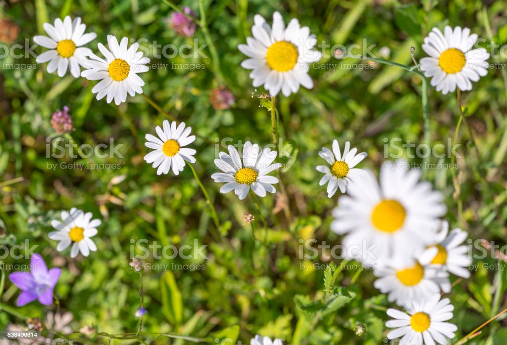 wildflowers at spring time stock photo