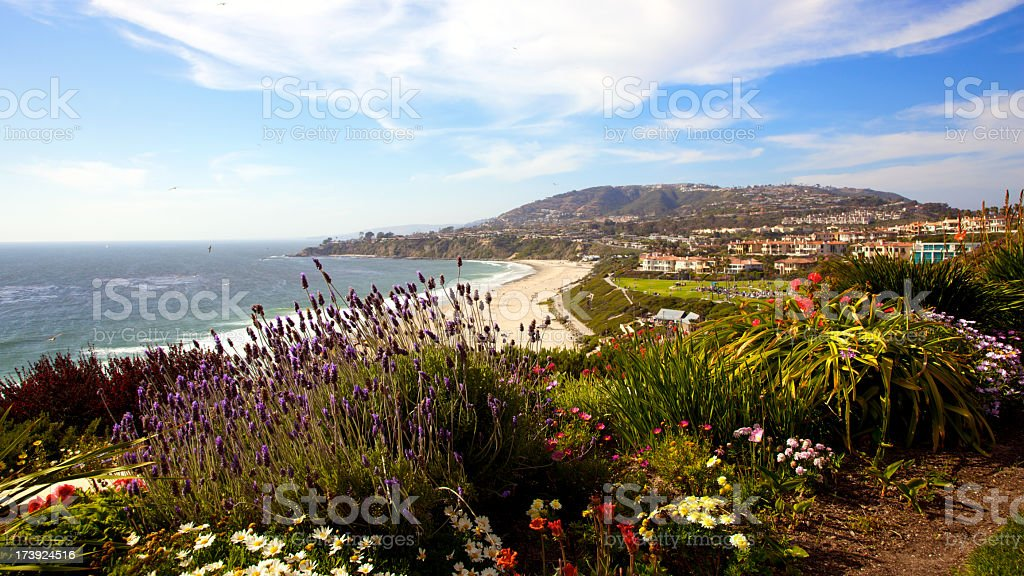 Wildflowers at the Southern California coastline stock photo