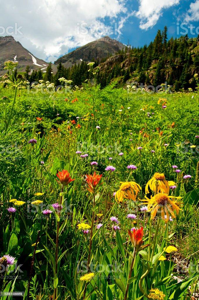 Wildflowers blooming in spring in Colorado. stock photo