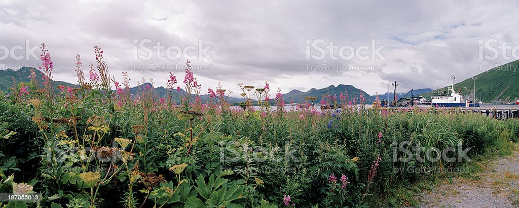 Wildflowers, Dutch Harbor, Alaska stock photo