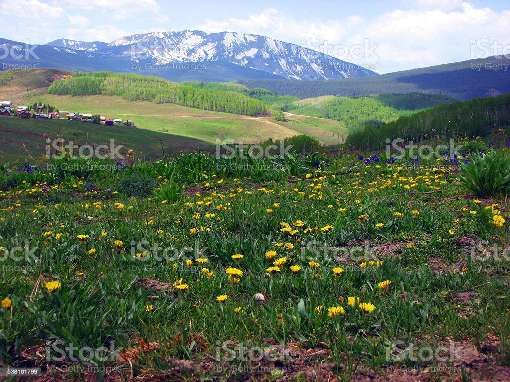 Wildflowers growing on a hill with Rocky Mountains in background stock photo