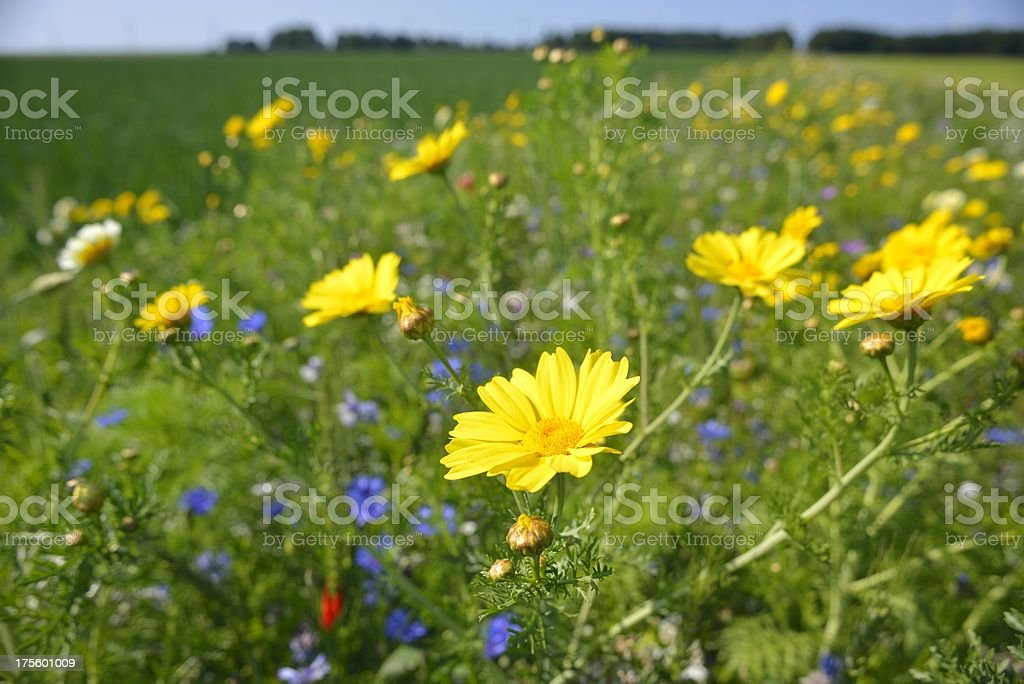 Wildflowers in a field stock photo