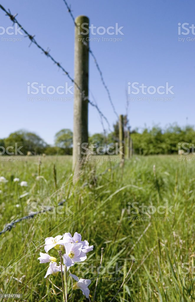 Wildflowers in a Meadow royalty-free stock photo