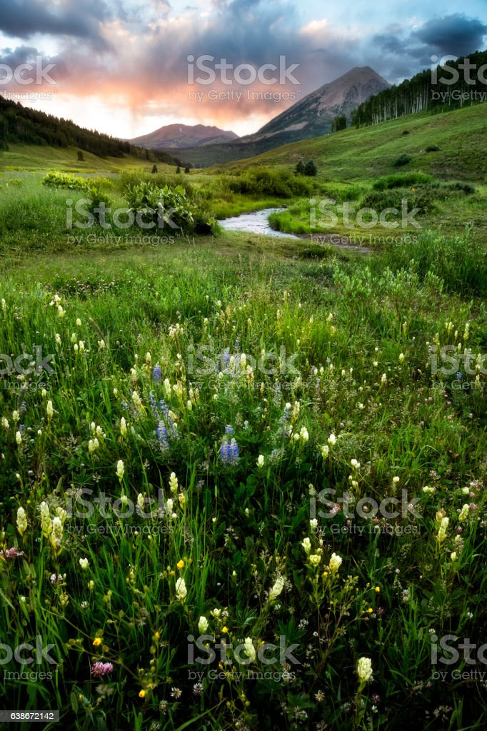 Wildflowers in Crested Butte stock photo